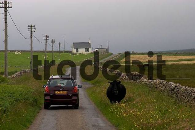 single track roads are typical for the rural countryside of Scotland. Scenery Isle of Islay.