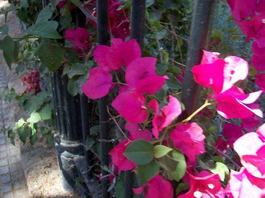 Pay for Flores junto a la cancela del parque Genovés