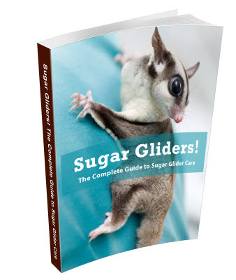 Pay for Sugar Gliders - Complete Guide to Sugar Glider Care